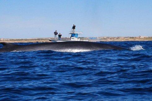 Le balene passano a un miglio dalla costa di Lampedusa